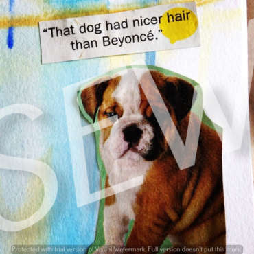 """That dog had nicer hair than Beyonce"""